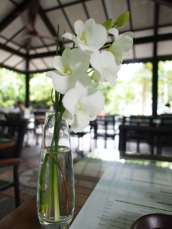 White orchid on a restaurant table