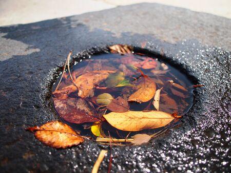 Coloridas Hojas ca�das en un pozo de agua Foto de archivo