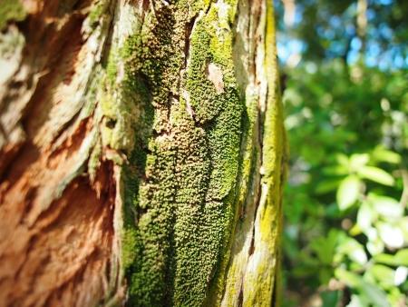 Fresh musgos verdes en la corteza del �rbol viejo