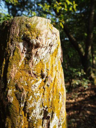 Los musgos en el tronco de �rbol muerto