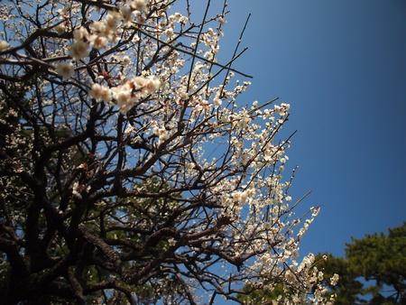 White Peach Blossoms