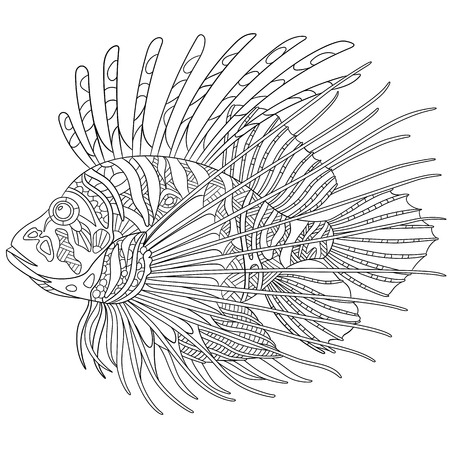 pterois volitans: stylized cartoon zebrafish (lionfish,pterois volitans), isolated on white background. Sketch for adult antistress coloring page. doodle,  elements for coloring book.