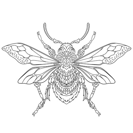 stylized cartoon beetle insect, isolated on white background. Sketch for adult antistress coloring page.  doodle, floral design elements for coloring book.
