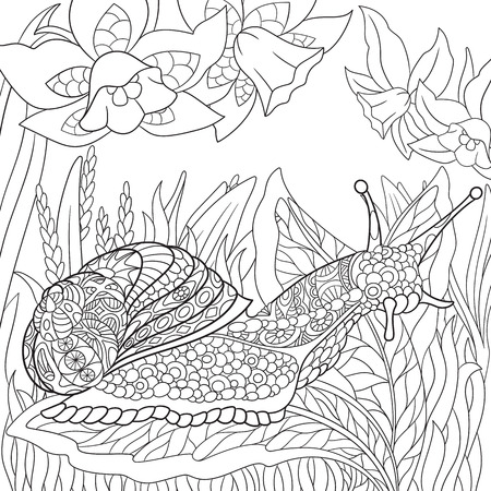 Zentangle stylized cartoon snail crawling among narcissus flowers. Sketch for adult antistress coloring page. Hand drawn doodle, zentangle, floral design elements for coloring book. Vettoriali