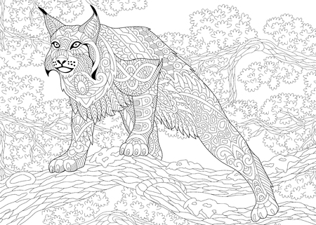 stylized cartoon hunting wildcat (lynx, american bobcat, caracal) ready to attack.  sketch for adult antistress coloring book page with doodle,  floral design elements. Ilustração