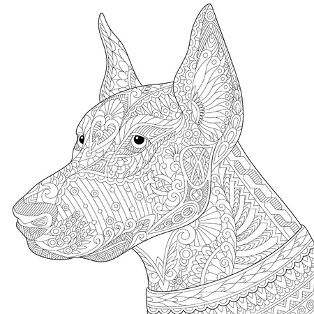 pinscher: Stylized doberman pinscher dog, isolated on white background. Freehand sketch for adult anti stress coloring book page with doodle elements.