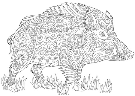 drawing: Stylized wild boar (razorback, warthog, hog, pig). Freehand sketch for adult anti stress coloring book page with doodle and zentangle elements.