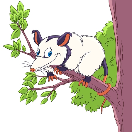 possum: Cute and happy cartoon opossum animal, isolated on white background. Childish vector illustration and colorful book page for kids. Illustration