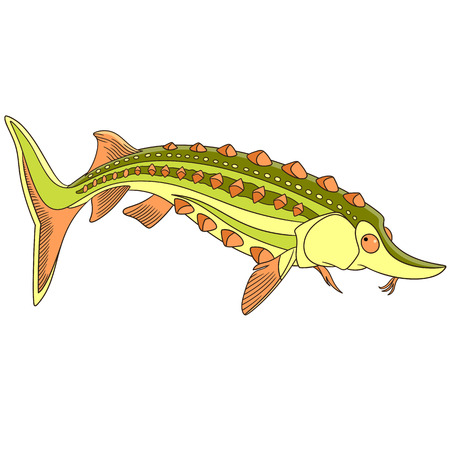 Cartoon Underwater Sturgeon Fish, Isolated On White Background. Childish  Vector Illustration And Colorful Book
