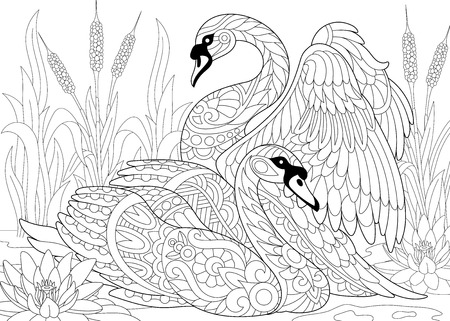 Stylized couple of two swans among lotus flowers (water lilies) and pond plants. Freehand sketch for adult anti stress coloring book page with doodle and zentangle elements. Illustration