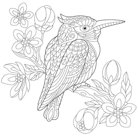 Coloring page of australian kookaburra Illustration
