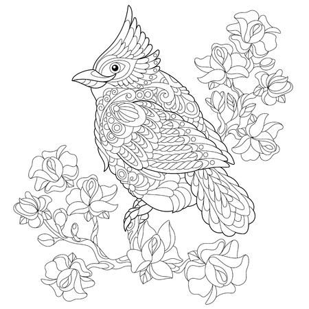 Coloring book page of northern red cardinal bird sitting on cherry blossoming tree branch. Freehand sketch drawing for adult antistress colouring with doodle and zentangle elements.