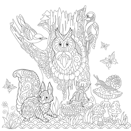 Coloring book page of forest landscape, owl, cuckoo bird, woodpecker, squirrel, snail, stag beetle, butterflies. Freehand drawing for adult antistress colouring with doodle and zentangle elements.