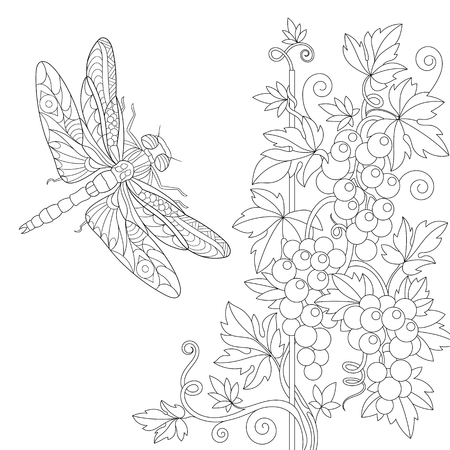 Coloring page of dragonfly and grape vine. Freehand sketch drawing for adult antistress colouring book with doodle and zentangle elements. 向量圖像