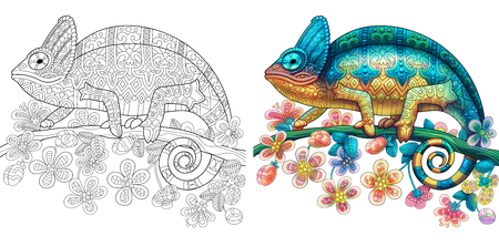 Coloring page of chameleon lizard. Colorless and color samples for book cover. Freehand sketch drawing for adult antistress colouring with doodle and zentangle elements. Stock Illustratie