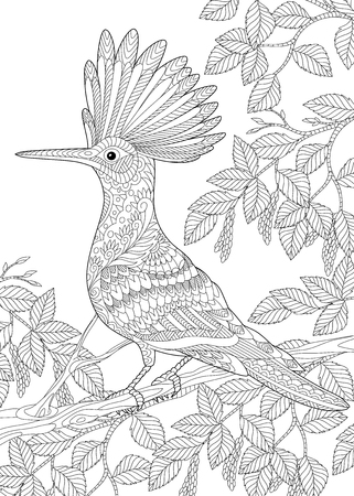 Coloring page of hoopoe bird (Upupa epops) sitting on birch tree branch.
