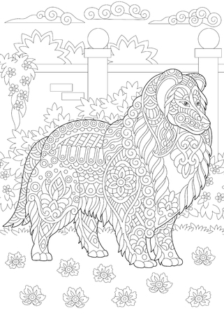 Rough Collie dog. Shetland Sheepdog or Sheltie. Coloring Page. Adult Coloring Book idea. Anti-stress freehand sketch drawing with doodle elements.