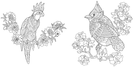 Coloring Pages. Coloring Book for adults. Colouring pictures with cockatoo and red cardinal bird. Antistress freehand sketch drawing with doodle and elements.