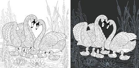 Coloring Page. Coloring Book. Colouring picture with Swan family drawn in style. Antistress freehand sketch drawing. Vector illustration. Ilustração