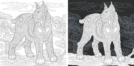 Coloring Page. Coloring Book. Colouring picture with Wildcat drawn in style. Antistress freehand sketch drawing. Vector illustration.