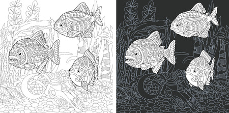 Coloring Page. Coloring Book. Colouring picture with Piranha Fish drawn in hand draw style. Antistress freehand sketch drawing. Vector illustration.