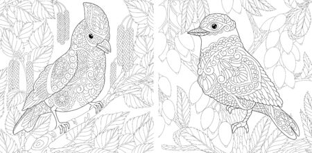 Adult coloring pages. Cute birds sitting on tree branches. Line art design for antistress colouring book in zentangle style. Vector illustration.