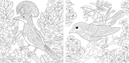 Adult coloring pages. Beautiful birds in the spring garden. Line art design for antistress colouring book in zentangle style. Vector illustration.