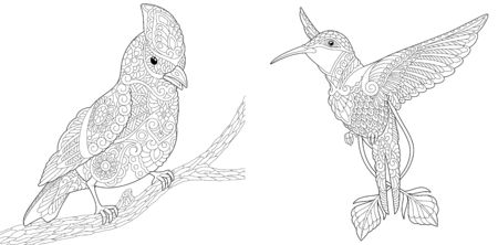Coloring pages. Bird set with northern red cardinal and hummingbird. Line art design for adult colouring book with doodle and elements. Vector illustration. Stock Illustratie