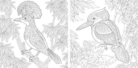 Coloring pages. Hoopoe bird and Australian laughing kookaburra or kingfisher. Line art design for adult colouring book with doodle and elements. Vector illustration.