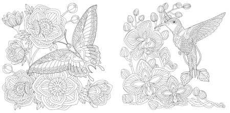 Coloring pages. Butterfly and peony flowers. Hummingbird and orchid flower. Line art design for adult colouring book with doodle and elements. Vector illustration.