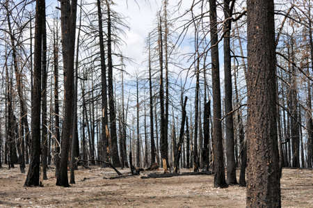 burned out: Bruciata Foresta