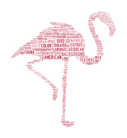 wader: flamingo text clouds concept on isolated background