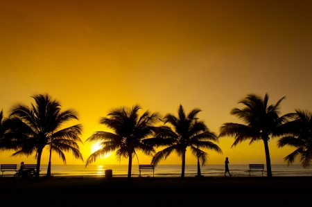 golden sunrise and silhouette palm tree photo