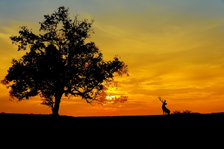 sunset against three and deer silhouette photo