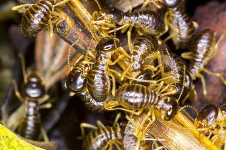 grupo de termitas a trav�s de macro Foto de archivo - 19628107