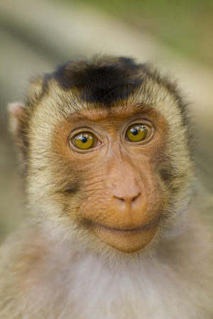 potrait of young asian monkey