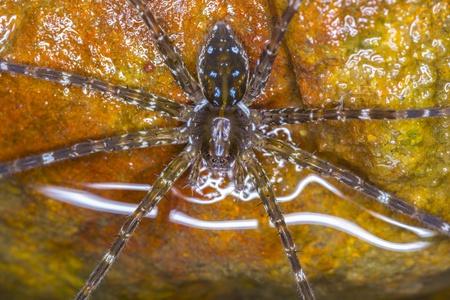 wolf spider: Wolf Spider from top view