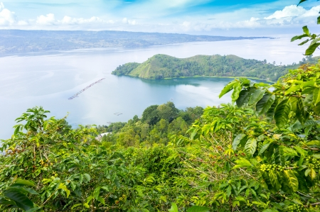 sumatra: lake toba, indonesia from coffee farm
