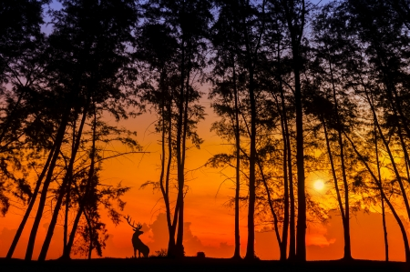 silhouette deer and tree via great sunset photo