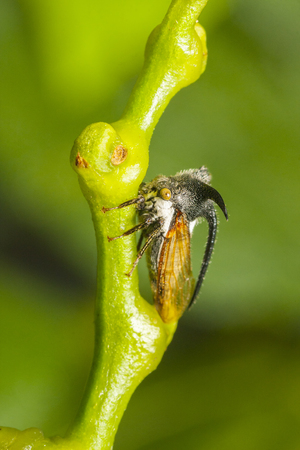 macro view of treehopper with green  photo
