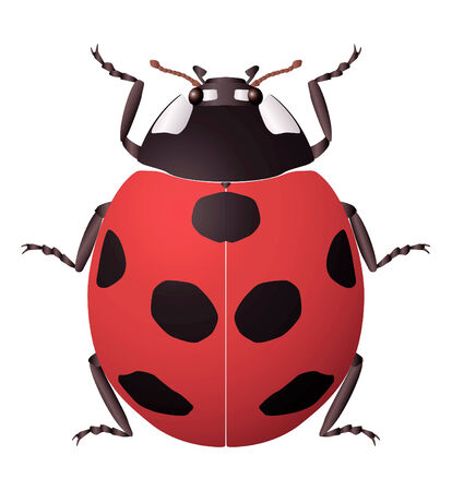 lady bug: ladybug icon on isolated background