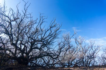 arboles secos: árbol muerto y cielo azul