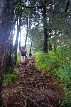 pine three: three bacpack hiker on pine forest