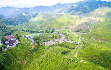 highlands: Green tea plantations Cameron Highlands in Malaysia