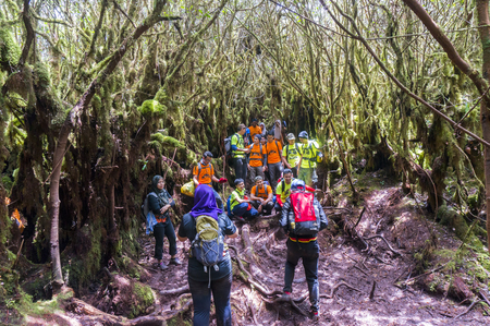 pahang: MALAYSIA - JULY 29: People hike the Irau mount trail on July 29, 2016 in Pahang region, Malaysia. Irau very popular mountain for climbers visitors and locals to enjoy the beauty of nature mossy forest