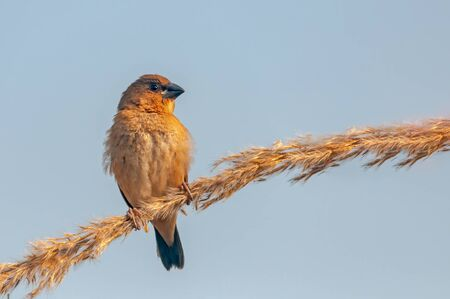 Scaly breasted munia sitting on a plant