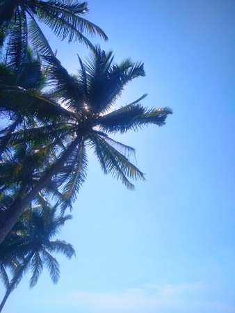 Coconut tree and hidden sun with clear blue sky -image Banco de Imagens
