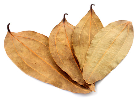 cathartic: Dried cassia leaf over white background