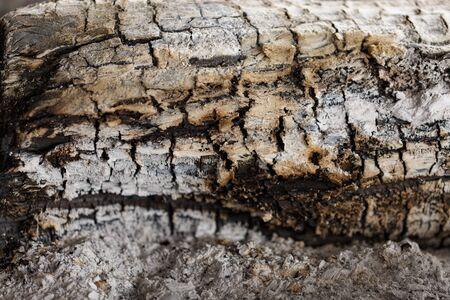 burnt: burnt wood