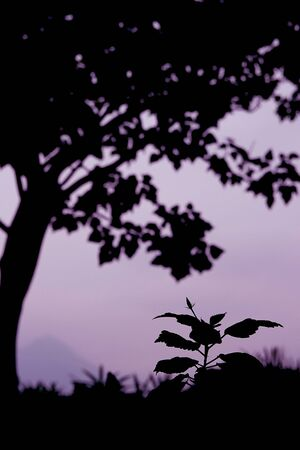 Silhouette of a big tree and a small plant create a visual  contrast with size and focus. Stock Photo